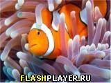Игра Пазл Рыбка-клоун онлайн