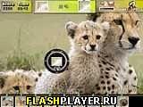 Игра Фото охота на природе онлайн