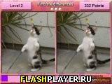 Найди отличия – Самые милые кошки