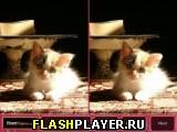 Котёнок – найди различия
