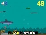 Жизнь рыбы