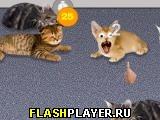 Кот и киска