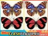 Различия в бабочках