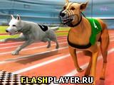 Симулятор собачьих бегов 3Д