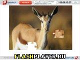 Игра Газель онлайн