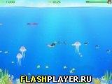 Игра Ракушки онлайн