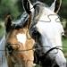 играть в пазлы лошади онлайн