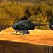 играть в симуляторы вертолета онлайн