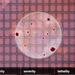 играть в симуляторы вируса онлайн